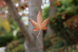 suspended leaf